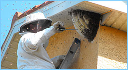 Bees & Wasps Removal Services