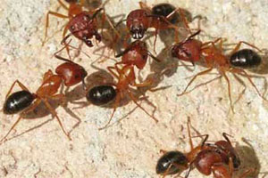 Ants-Ants-Everywhere-Follow-These-7-Tips-to-Block-Their-Entry