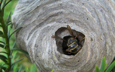 Ready For Hornet Nest Removal? 3 Safety Tips To Consider
